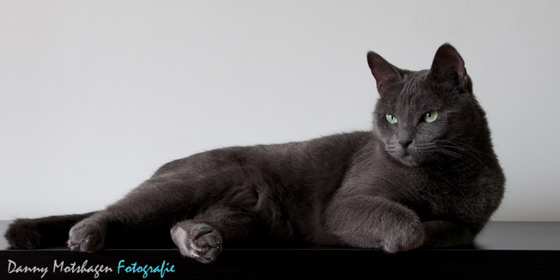 [:nl]Russian Blue Too[:en]Russian Blue Too[:]